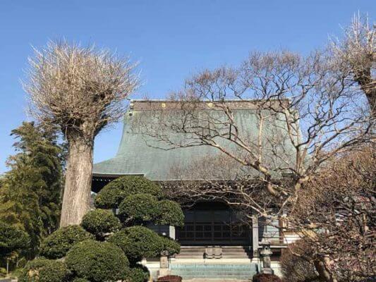 龍源寺の大銀杏