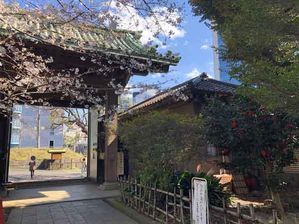 斎藤一が勤めた仰高門の門衛所(門の右)と桜
