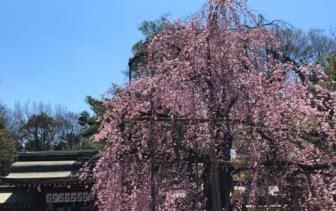 花見の季節に行きたい!桜が綺麗な新選組ゆかりの地