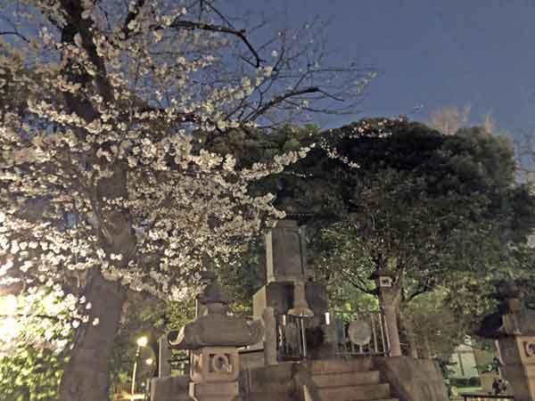 彰義隊の墓と夜桜