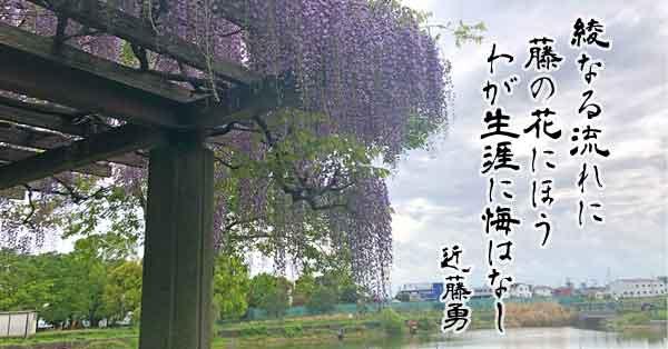 出羽公園(近藤勇ゆかりの藤)|越谷市の新選組観光スポット・ゆかりの地