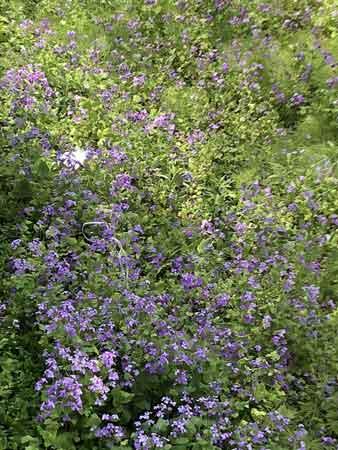 玉川上水跡に咲いていた花