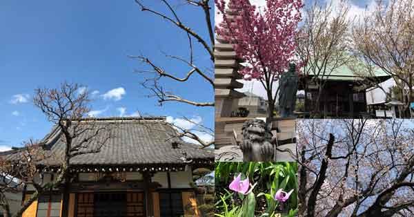春の東光寺道ツアーに行ってきました|新選組イベントレポ