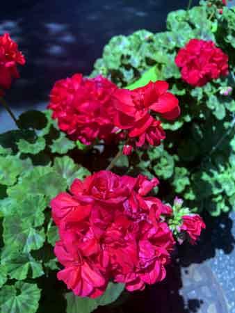 伊予松山藩中屋敷跡に咲いていた花